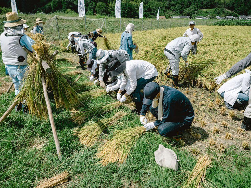 稲の束をまとめる人たち